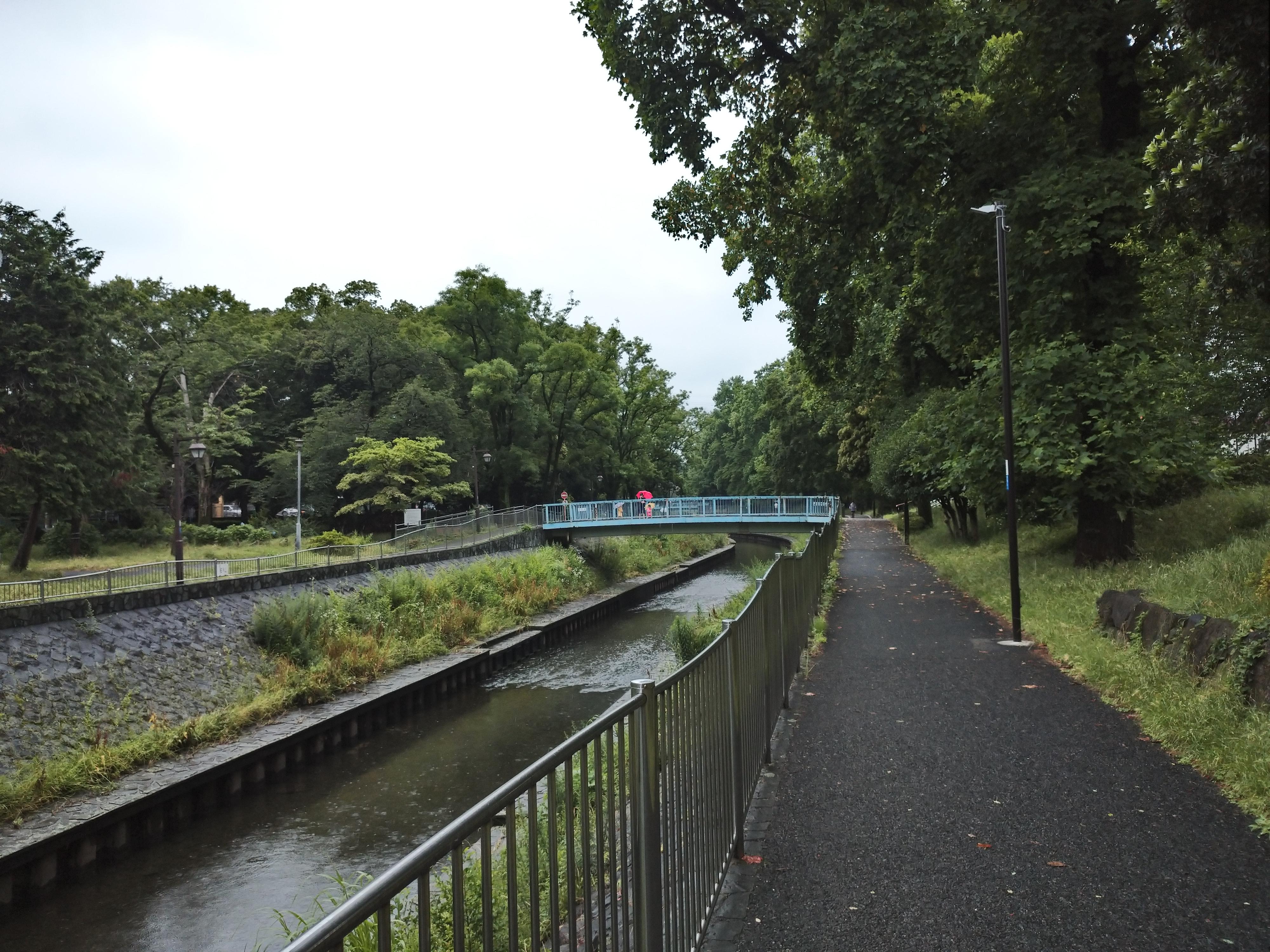 6月の善福寺川